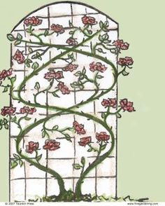 Pruning Climbing Roses | Fine Gardening-Pruning climbing roses ensures that they will bloom vigorously in the coming season.