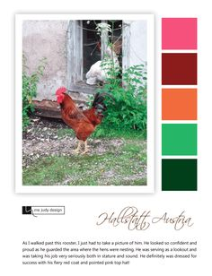 Farm influence: A rooster proudly parades his colorful uniform as he stands guard :) Location: Hallstatt, Austria - mejudydesign.com Color Stories, Austria, Rooster, Nest, Wildlife, Colorful, Pictures, Drawings