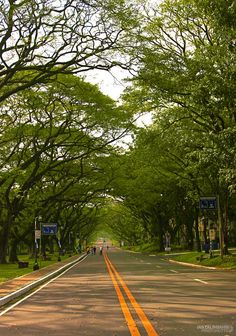 December 2011, UP Diliman