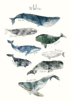 Whales Art Print by Amy Hamilton