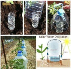 """Drip bottle irrigation - me encanta! Growing Vegetables with 10 times less water – """"Solar Drip Irrigation"""" an experime - Growing Plants, Growing Vegetables, Growing Gardens, Growing Tomatoes, Solar Water, Drip Irrigation, Diy Irrigation System, Self Watering, Watering Plants"""