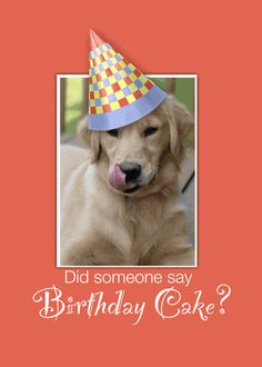 935 Best Happy Birthday Dogs Images In 2019 Birthday Wishes