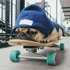 Imagen de dog, cute,