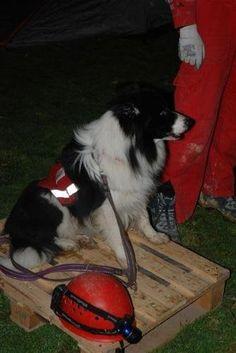 AKUT Search Dog Team www.akut.org.tr