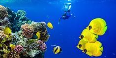 #Taucherin erkundet ein #Riff im #Roten #Meer © shutterstock