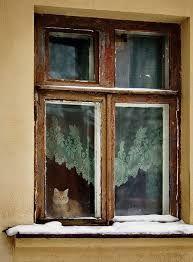 Resultado de imagen para gatos en ventanas