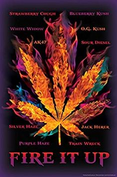 Fire It Up Marijuana Leaf Types Pot Cannabis College Poster inch Marijuana Leaves, Medical Marijuana, Weed Backgrounds, Leaves Name, Cool Wall Decor, Weed Art, Puff And Pass, Smoking Weed, Dope Wallpapers