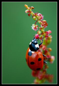 Jack the ladybird by ~MessiahKhan on deviantART
