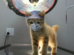 PetsLady's Pick: Funny Cat Scan Of The Day