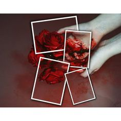 Rose by lynette-kenfin on Polyvore featuring art, Flowers, rose and blood