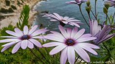 Flores en Cap Salou, Tarragona