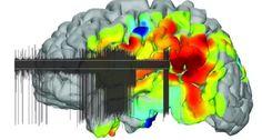 نوروسافاری | موسسه دانش بنیان آینده مغز (نوروسافاری) با همکاری آزمایشگاه دینامیک مدارهای عصبی قشر مغ