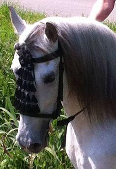Brand new Draft Horse spanish bridle with black//white mosquero