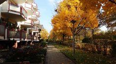 Frankfurt am Main im Herbst.  Wohnen in Frankfurt - Wohnung in Frankfurt. #Frankfurt #Wohnung #apartment #autum