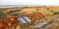 Sedum-Urt-Græs Veg Tech tagvegetation Sedum Roof, Solar Panels, Tech, Urban, Sun Panels, Solar Power Panels, Technology