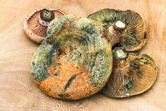 Edible Mushrooms, Stuffed Mushrooms, Arrows, Stuff Mushrooms