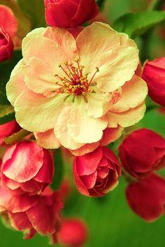 Red Flowers http://rockbottom.ownanewbusiness.com