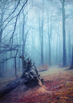 Silent Sadness - roots of a fallen tree on a misty fall day  texturized photograph