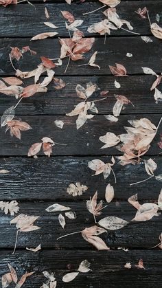 Wallpaper | Pinterest: @patriciamaroca