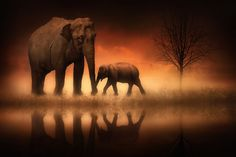"""The Elephants at Dusk"" by Jenny Woodward   #pic #picture #photography"