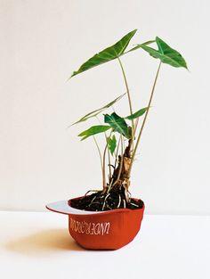 Você não tem desculpas para não ter uma planta em casa | Blog de Decoração, Móveis e Estilo | LojasKD BLOG | Decoração é aqui.