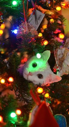 """O Christmas Tree, O Christmas Tree. your ornaments are history!"" Keep your cats out of the Christmas tree. Plus, some decorating precautions to keep kitty safe. Christmas Animals, Christmas Cats, All Things Christmas, Christmas Time, Merry Christmas, Naughty Christmas, Cute Kittens, Cats And Kittens, Funny Kitties"