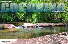 Coconino National Forest in Cottonwood-Verde Village, Arizona