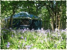 a yurt in a blubell wood secret and seductive- Lake District
