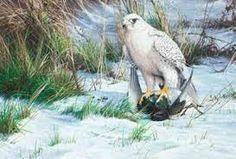 White Gyr Falcon By Bord of Prey Artist Alan M Hunt Image result for alan m hunt Gyr, British Wildlife, Birds Of Prey, Eagles, Paintings, Artist, Image, Animals, Animales
