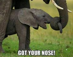Got Your Nose Pictures, Photos, and Images for Facebook, Tumblr, Pinterest, and Twitter