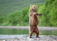 Sexy and I know it #bear
