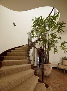 un palmier exotique Rhapis gracilis dans une jardinière en terre cuite