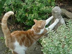 stretching cat with Buddha statue I Love Cats, Crazy Cats, Cute Cats, Funny Cats, Gatos Cats, Matou, Orange Cats, Tier Fotos, Cutest Animals