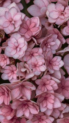Garden Wallpaper, Flower Phone Wallpaper, Iphone Wallpaper, Wallpaper Tumblrs, Wallpaper Backgrounds, White Wallpaper, Pastel Wallpaper, Wallpaper Quotes, Pink Flowers