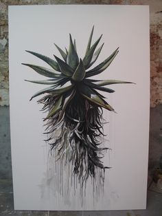 Kurt Po and his Aloe Watercolor And Ink, Watercolor Illustration, Protea Art, Scale Art, Occult Art, South African Artists, Aesthetic Drawing, Whimsical Art, Flower Art
