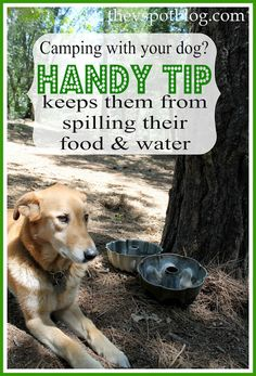 A handy tip to keep your dog from spilling their food & water. (Especially great for camping.) » The V Spot