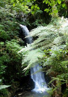 McLaren Falls Sight & Sound, Waterfalls, New Zealand, Around The Worlds, Nature, Outdoor, Outdoors, Naturaleza, Outdoor Games