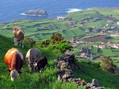 Azores Places In Portugal, Portugal Travel, The Beautiful Country, Beautiful World, The Places Youll Go, Places To Visit, Skier, Beach Scenes, Archipelago