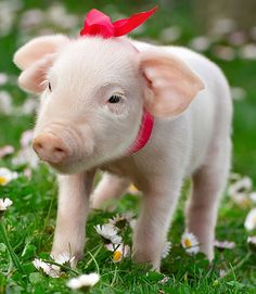 piglet.. Loved pigs when I was little.  Perfect Pig was my favorite book!