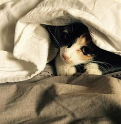 A cat in the bed
