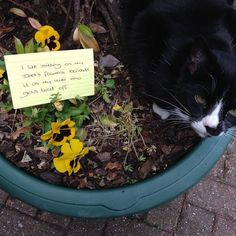 """""""I like sitting on my dad's flowers because it is my mum who gets told off!"""""""
