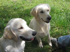 Cookie e Maggie: la prima vacanza insieme