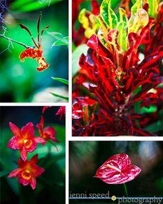 Hawaii's Tropical Flowers in Bloom