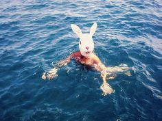 swimming bunny