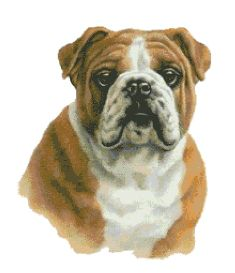 Counted Cross Stitch Chart ( Pattern ) - BULLDOG