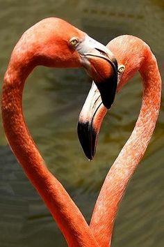 Pink in Flamingos All Birds, Love Birds, Beautiful Birds, Heart In Nature, Heart Art, Flamingo Art, Pink Flamingos, Flamingo Pictures, Baby Animals