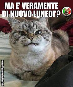 Ma è veramente di nuovo lunedi'? (www.VignetteItaliane.it)
