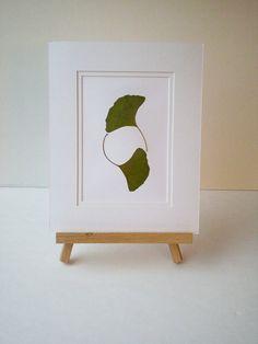 Framed gingko leaves / Hojas de gingko enmarcadas