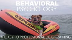 You can share this with anyone who has gotten a puppy or adopted a dog over the holidays, or for anyone that feels like undertaking the project of getting their dog expertly trained without having to use any punishments.      You will also learn a great deal about behavioral psychology in the process and will be able to apply the concepts to all of your human relationships. We hope you enjoy it.
