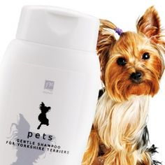 Gentle Shampoo for Yorkshire Terriers
